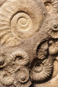 Bekijk details van Kindercollege | Alles over fossielen 8+