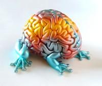 Bekijk details van Kindercollege | Voelen doen we met onze hersenen 8+
