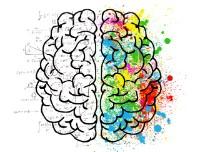 Bekijk details van Kindercollege | Voelen doen we met onze hersenen 10+