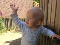 Bekijk details van Cursus babygebaren voor ouders